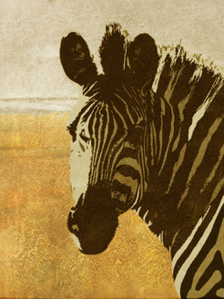 Zebra Dreams,Zebra,Wild life, African equids,stripes of zebras