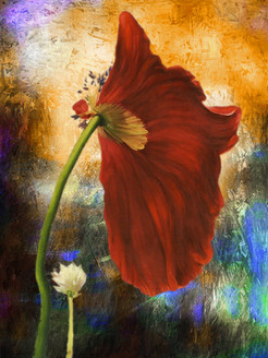Flower,Floral,playing Flower,Colorful flowers,petal,beauty of floral,bloom ,blossom