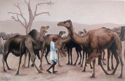Camel, rajasthan, rajasthani,Camel,ART_1090_14411,Artist : Mohan Verma,Oil