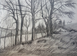 Black and White, Black, White, Pencil, Sketch, Painting, Beauty, Beautiful, Scenic, Pretty, Forest, Trees, Jungle, NAture, Landscape,FORESTS,ART_2709_19571,Artist : Zeel Savla,Charcoal