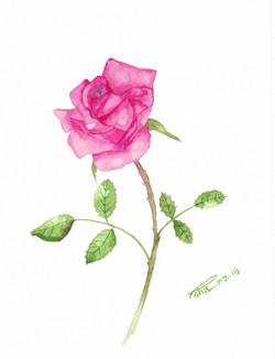 Pink Rose (ART_4123_25947) - Handpainted Art Painting - 9in X 12in