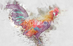 Rooster Cock (PRT_74) - Canvas Art Print - 34in X 21in