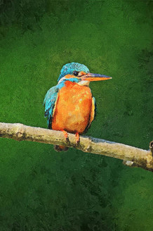 Blue Kingfisher (PRT_213) - Canvas Art Print - 17in X 25in