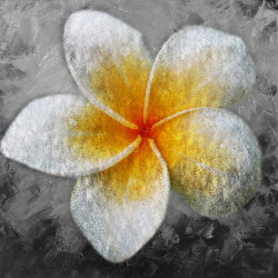 41Egg Flower03 - 24in X 24in,41Egg Flower03_2424,Oil Colors,Canvas,Single Flower,Yellow and White Flower,Silver Background,Museum Quality - 100% Handpainted,White, Light Shades,60X60 Size,Flowers, Animals, Nature Art Canvas Painting Buy canvas art pa