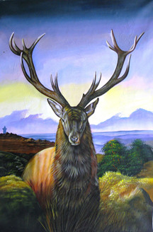 Wild Animal,Deer,Motely Moose