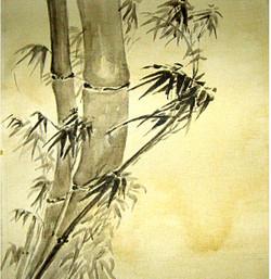 Landscape,Nature,Baboo Tree