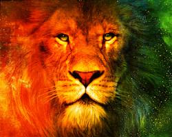 Lion,King,Jungle King,Sher