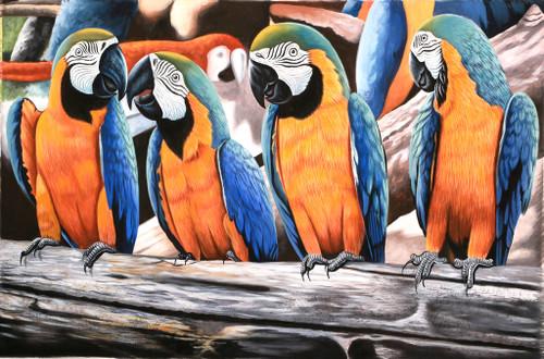 four Macow,Parot Species,Beautiful Birds