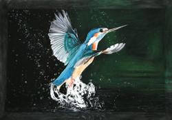 Swimmer,Bird,Blue Bird