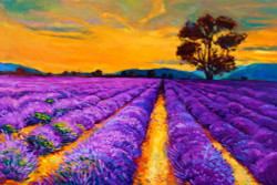 landscape, scenary, flower, blossoms, purple flower , flower field, flower farm, purple