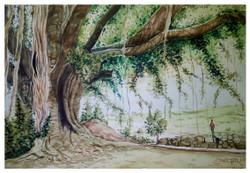 tree, big tree, landscape, peepal , village