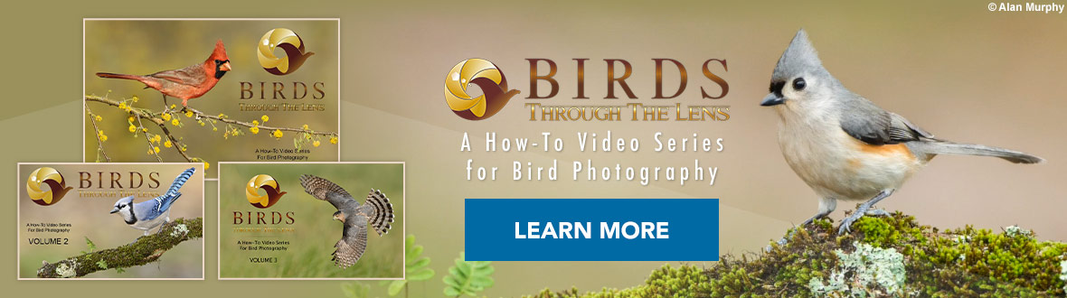 Birds Through the Lens - A How-To Video Series for Bird Photography by Alan Murphy. Learn how to produce award-winning images with this 3+ hour hi-definition video collection. Learn More →