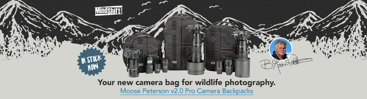 Your new camera bag for wildlife photography. Moose Peterson v2.0 Pro Camera Backpacks - In stock now!