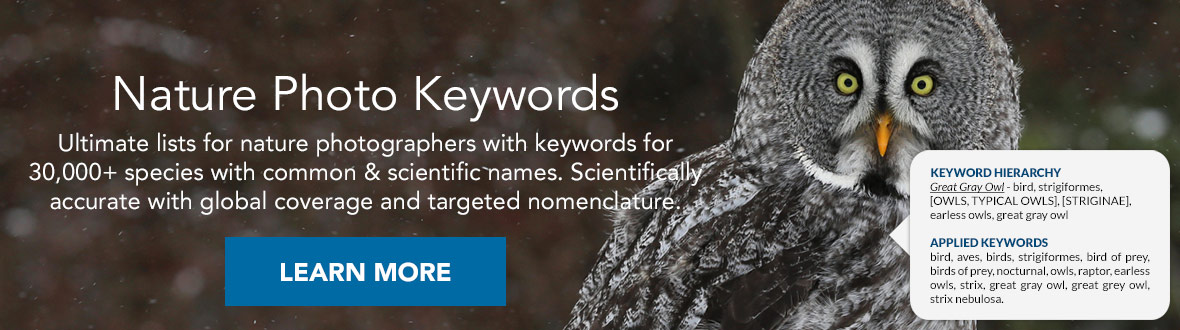 Nature Photo Keywords | Ultimate lists for nature photographers with keywords for 30,000+ species with common & scientific names. Scientifically accurate with global coverage and targeted nomenclature. LEARN MORE →