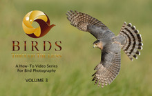 Birds Through the Lens - How-To Video Series for Bird Photography, Volume 3