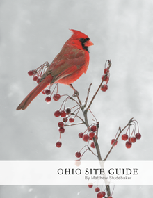 Guide to Ohio's Best Places for Bird Photography by Matthew Studebaker
