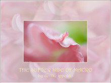 The Softer Side of Macro by Denise Ippolito, Edited by Arthur Morris