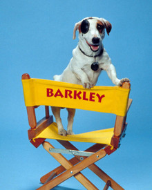 Barkley (the dog) in Clean Slate Poster and Photo