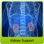 kidney-support-small2.jpg