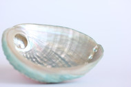 Abalone Shell (Large, 5 Inches)