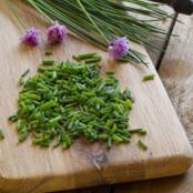 Botanical - Allium schoenoprasum