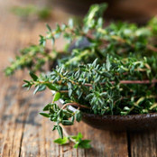Botanical - Thymus vulgaris