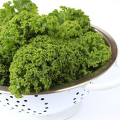 Botanical - Brassica oleracea (Acephala group)