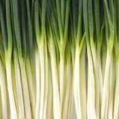 Botanical - Allium wakegi