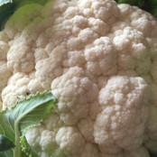 Cauliflower Seeds - Snow March F1