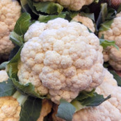 Cauliflower Seeds - Igloo