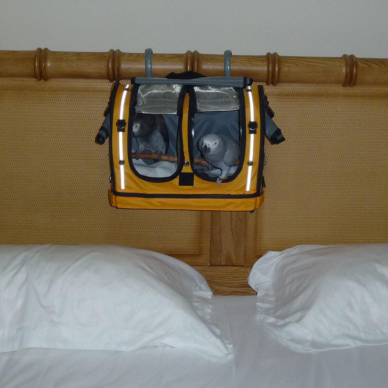 Two Greys Sleeping Hut