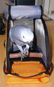 Clover inside Birdie Pouch