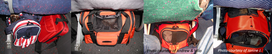 Are celltei pet carriers approved for in cabin airline travel for Air travel with dog in cabin