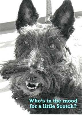 Angus Scottie Birthday Card