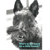 Scottie Birthday Card