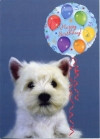 Westie Puppy and Balloon Birthday Card