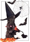 Bewitching Scottie Card