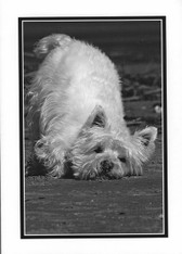 """Lost Without You"" Westie Card"