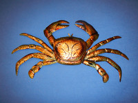 Large Metal Crab Wall Hanging