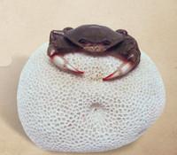 Brain Coral Crab Sea Life Decoration