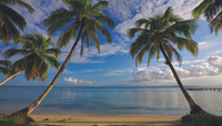 Mural Portfolio II Beach View With Palm Trees Mural MP4911M by York