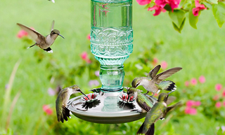 Hummingbird-feeders