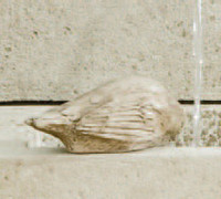 Campania Stone solo bird statue.