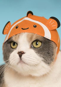 Cat Cap Aquarium Blind Box