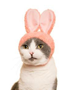 Cat Cap Rabbit Blind Box