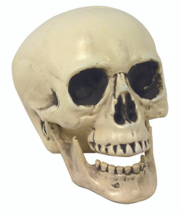 Forum Novelties Inc. - Skull Prop w/ Movable Jaw