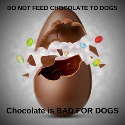 Chocolate is Great for Us........NOT FOR DOGS!!!