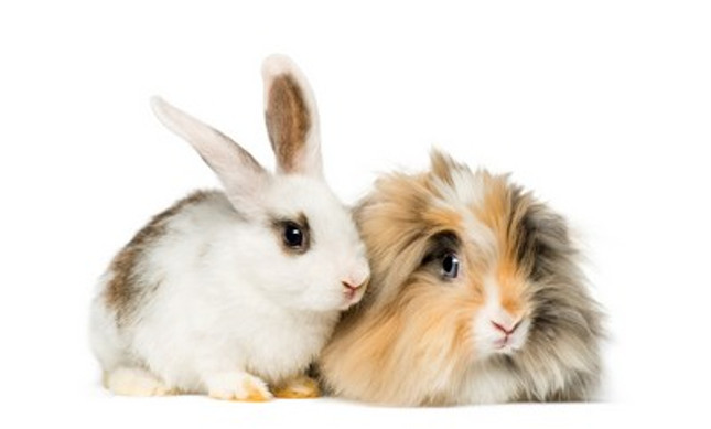 What Treats can I give my Pet Rabbit?
