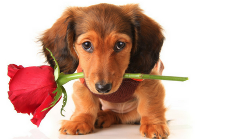 VALENTINES DAY IS FAST APPROACHING!!!!