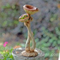 Little Frog Sleeping in Mushroom Figurine